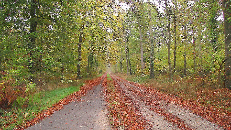 carrefour_Chemin des Meuniers_Route du Grand Octogone