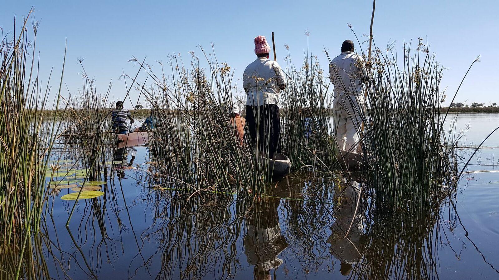 Botswana : des premiers jours magiques !