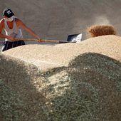 La Russie exporte des Céréales en abondance !