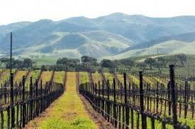 La vallée centrale de Californie et la vigne