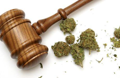 Sept mythes sur le cannabis et sa légalisation