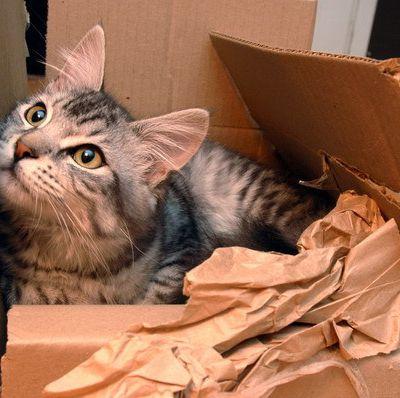 Le déménagement de nos animaux