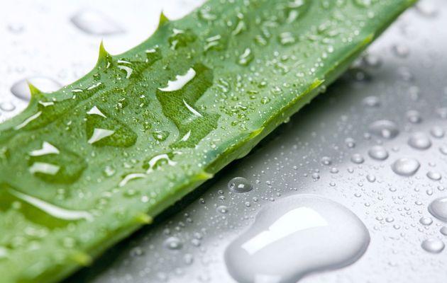 Petit diaporama : Les vertus de l'Aloe Vera