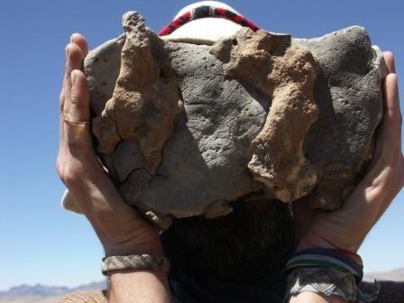 fossils marins de plusieurs millions d annees, symbole de la creation des continents et de la formation des Andes