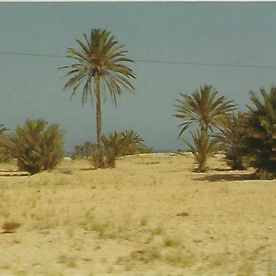 La merveille de Djerba