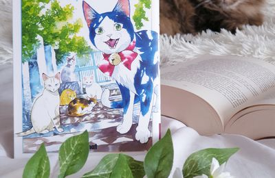 Le chat aux sept vies #1 > Gin Shirakawa
