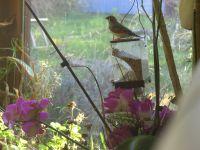 L'amour de la liberté et de la nature chez moi! At home,I don't like cages for the birds!