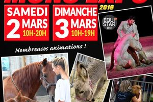 MONS  SALON DU CHEVAL 2019