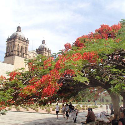 Semana Santa 2014: Oaxaca