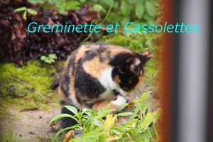 Parlez vous Chat ? La Suite… On progresse doucement…