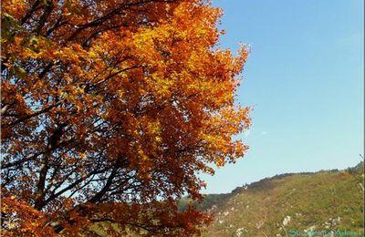 Feu d'automne en Cèvennes...