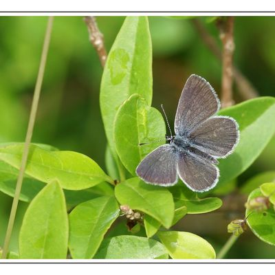 Papillons à Ensoulesse & 2013
