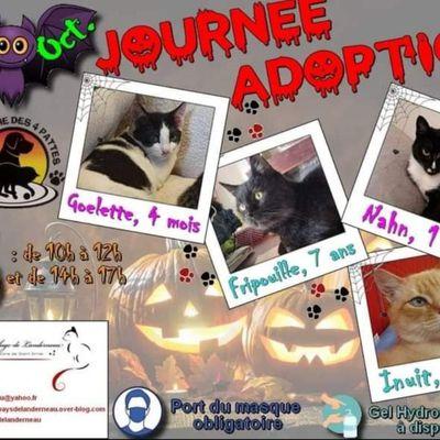Journée adoptions chats et chatons ce samedi Lesneven