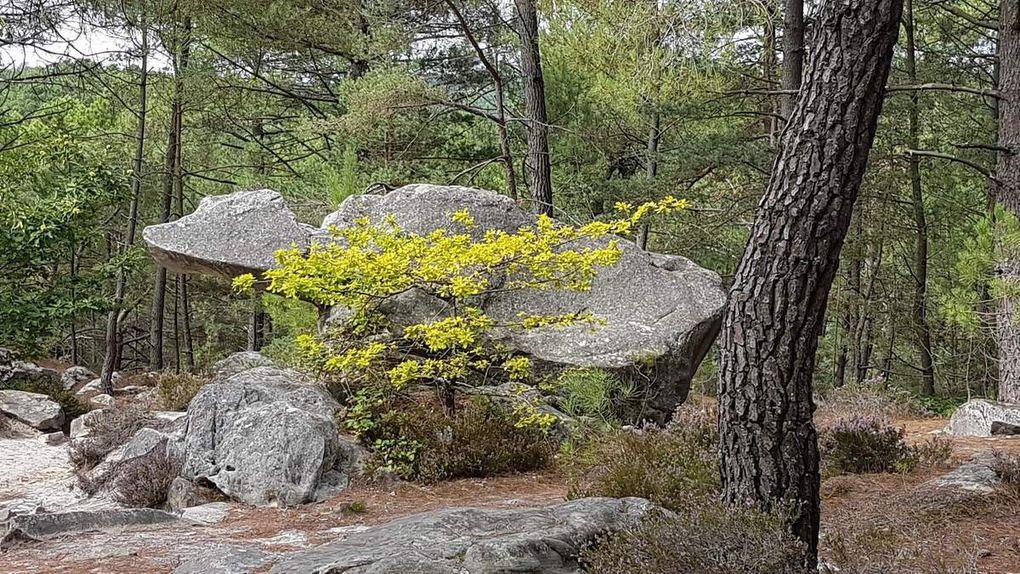 Randonnée des 25 bosses dans la forêt de Fontainebleau