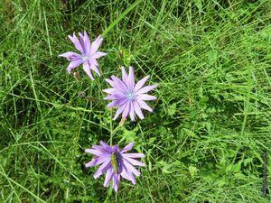 Quelques fleurs de la garrgue