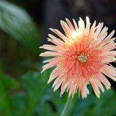 Fleurs du jour (21-18) - Noy et Gilbert en Thaïlande