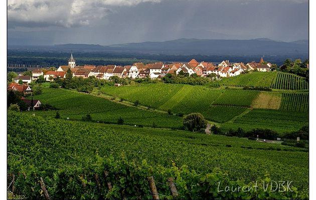 Alsace : Zellenberg