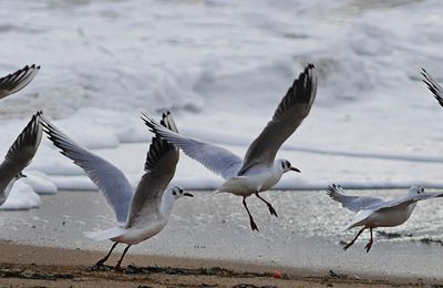Course de playmouette