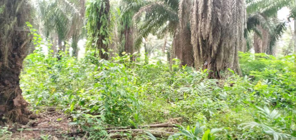 TERRAIN PLANTATION A VENDRE ABIDJAN