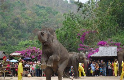 Le temps où je montai un éléphant (9/12)