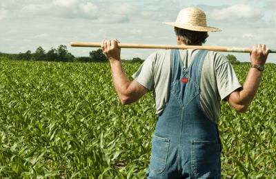 RoumanIE : Secteur agriculture – Une bataille contre la pandémie et la sécheresse !