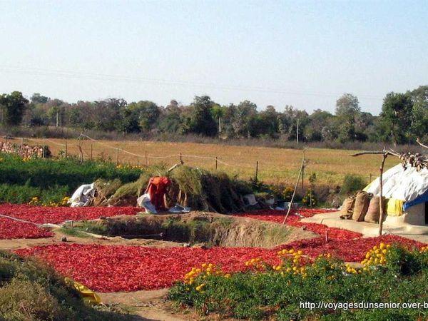 KHAJURAHO (Madhia Pradesh-INDE)