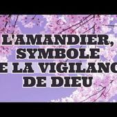 L'AMANDIER, SYMBOLE DE LA VIGILANCE DE DIEU -- THE ONE WHO WATCHES