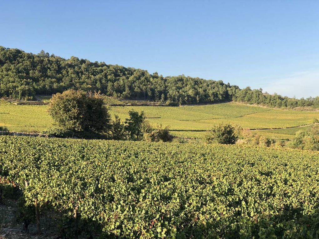 Des hommes et une terre: Blagny sur Meursault et Puligny