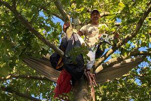 Le « grimpeur arboriste » Thomas Brail se bat contre l'abattage de platanes à Blagnac