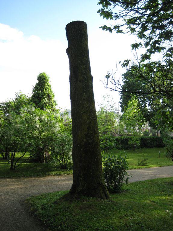 Album - jardin-botanique