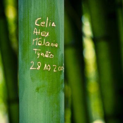 Quatre noms pour un bambou