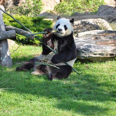 Les Gourmandises du Panda