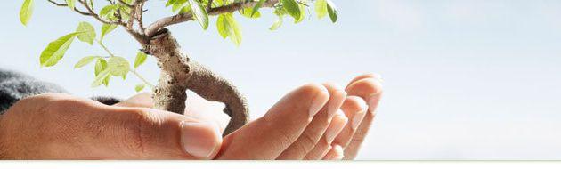 Notre blog est neutre en carbone