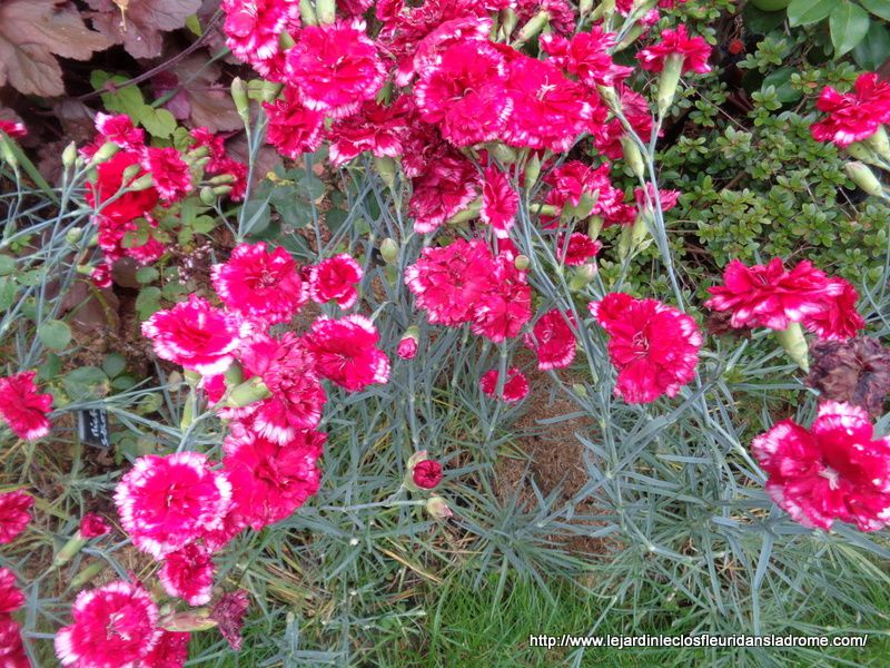 Mon jardin Le Clos fleuri en juin ....