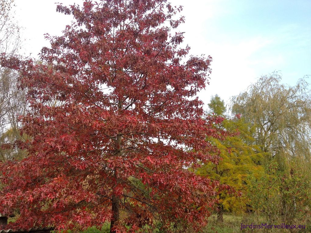 Secteur sud-ouest : Quercus palustris - Taxodium ditichum