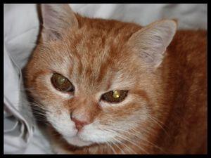 Yellow, chat mâle de 10 ans à la recherche d'un foyer -> adopté