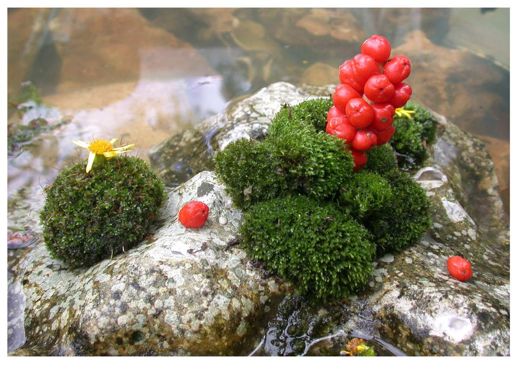 # art palettes # sculpture jardin # art et jardin # land art # art recyclage