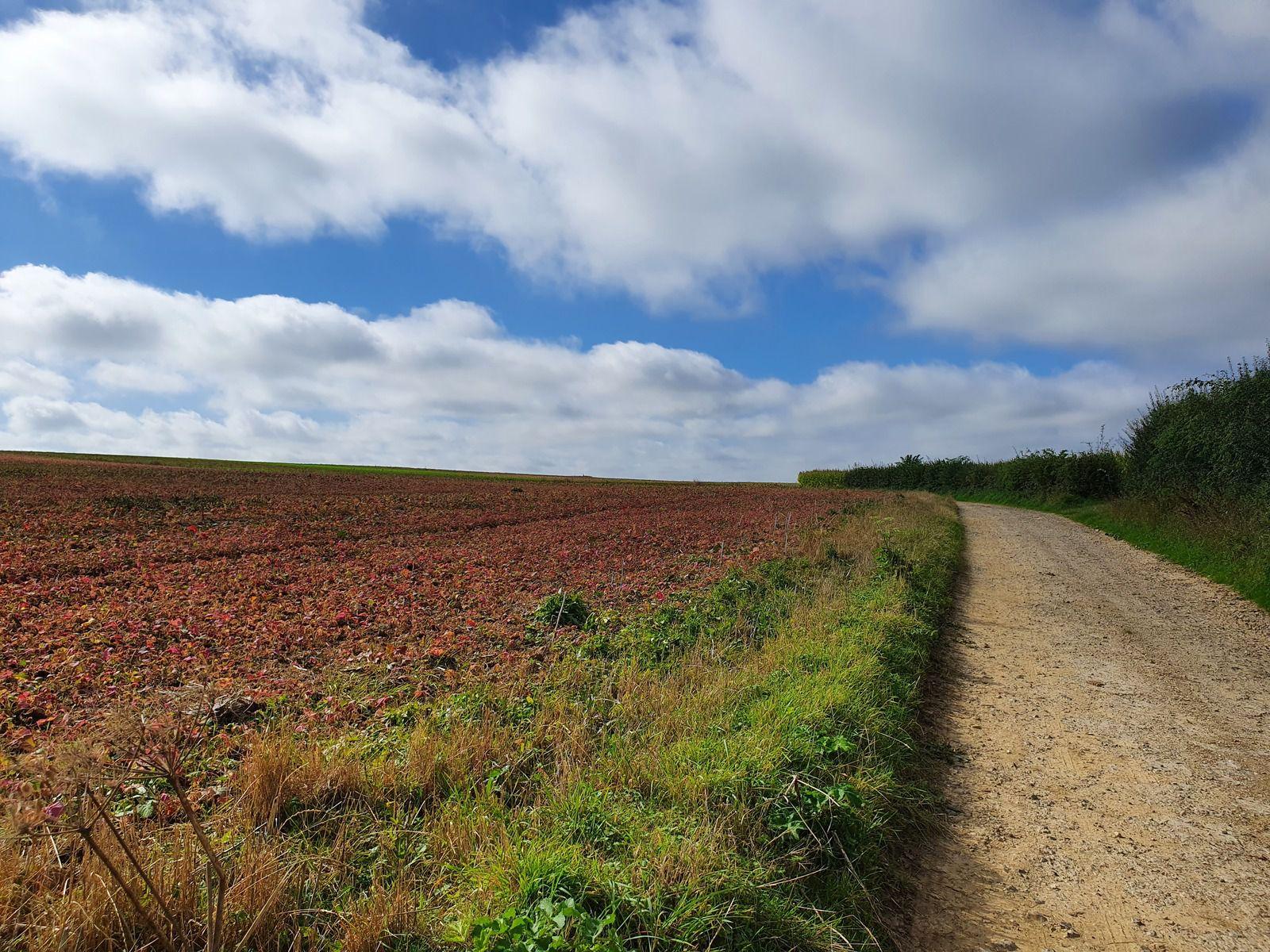 09 septembre 2020 - De la Planquette au Bois de Fressin