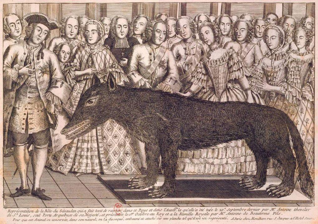 La bête tuée par François Antoine puis présentée au Roi à Versailles