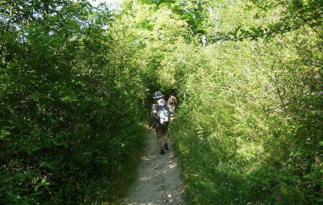 Randonnée d'Etampes à Saint-Martin d'Etampes - 20,2 km.