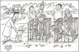 Zoos, préservation des espèces ou prison à perpétuité ?