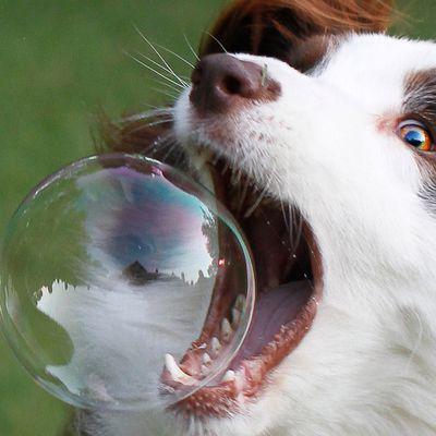 Notre écosystème ne crée que des startups « bulles de savon »