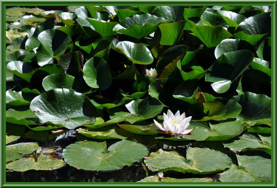 Le Vast, jardin de la Chenevière