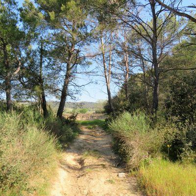Nouvelle petite balade pendant le confinement / Balade en Provence