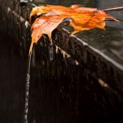 Feuille - Pluie - Automne - Picture - Free