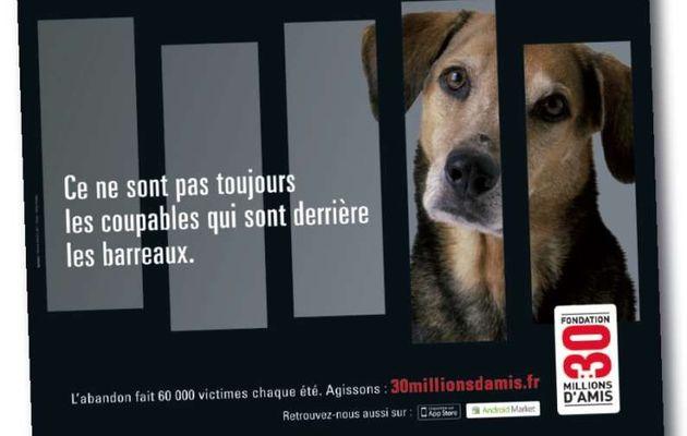 Pub de la semaine : lutte contre l'abandon d'animaux