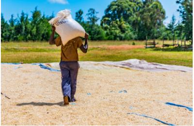 L'agro-écologie en Afrique: solution miracle ou chemin vers la pauvreté?