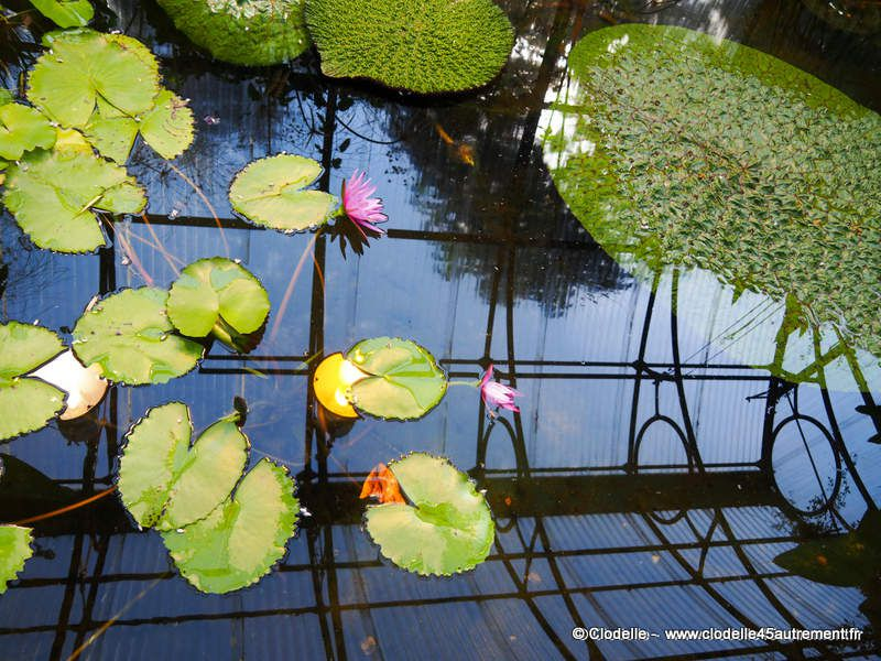 Les 21 Jardins du FESTIVAL INTERNATIONAL DES JARDINS DE CHAUMONT SUR LOIRE au cœur de l'été