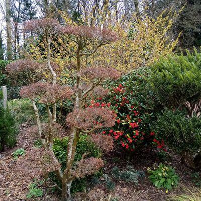 Le jardin de mes parents (février 2021)
