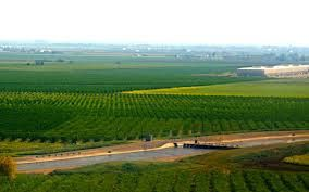 The Central Valley of California and the vine